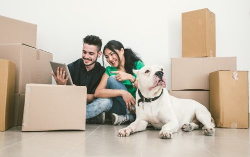 Couple looking for moving company quotes - moving house with a dog